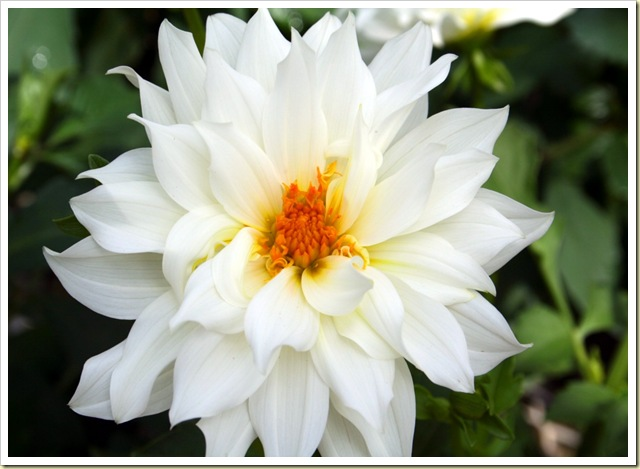 Beautiful-white-flower