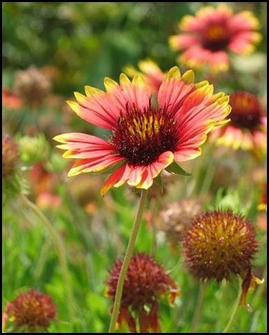 blscflowers200508