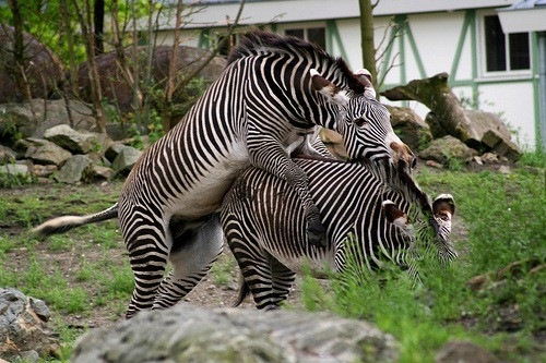 19-Amazing-Animals-Captured-While-Making-Love-015