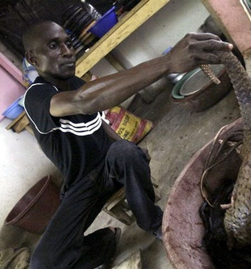 O que vendem os açougues da África?
