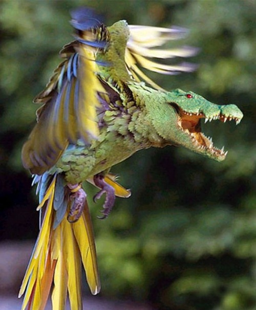 Os fabulosos animais híbridos criados com Photoshop