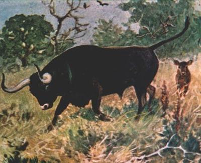 Auroque (extinto desde 1627)