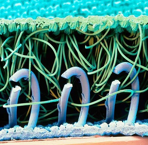 Ganchos de nylon em uma presilha de velcro.
