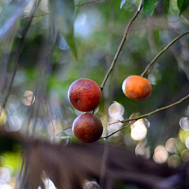 Orange Tree by Lorraine D.  Heaney - Food & Drink Fruits & Vegetables