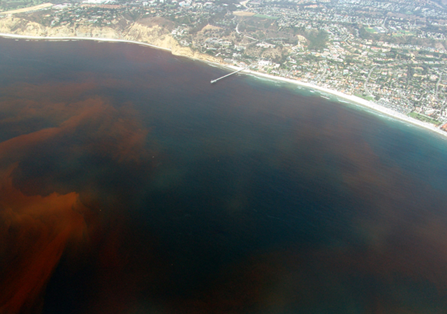 Red tide off the Scripps Institution of Oceanography Pier, La Jolla California, 13 August 2005. P. Alejandro Díaz / Wikipedia