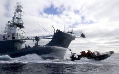 A Japanese harpoon ship pursues a Sea Shepherd inflatable boat. Sea Shepherd Conservation Society / Flickr