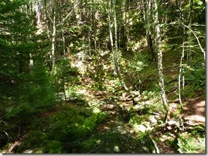 P1010131 parc national de Fundy balade aux chites Dickson