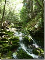 P1010135 parc national de Fundy balade aux chutes Dickson