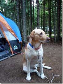 P1010245 camping saint louis du kent