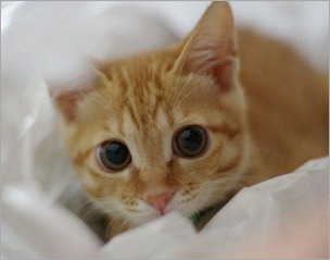 Cute_Cat_Big_Eyes
