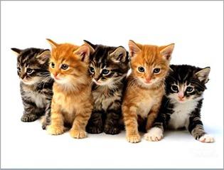 cute_cats03