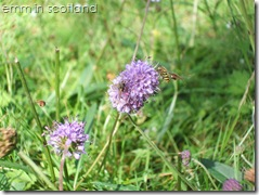 Loch Monzievaird (10)