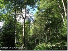 Loch Monzievaird (34)