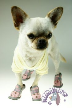 Chihuahua Clothes Boots