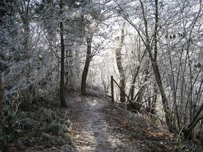 Muxton Marsh Nov, Dec 2010 066