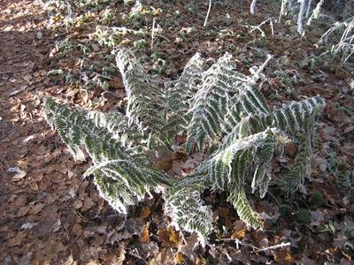 Muxton Marsh Nov, Dec 2010 048