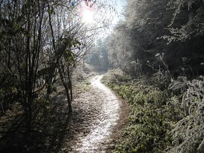 Muxton Marsh Nov, Dec 2010 054