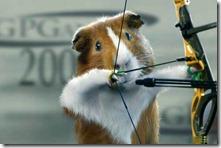 guinea-pig-sports-03