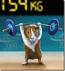 guinea-pig-sports-02
