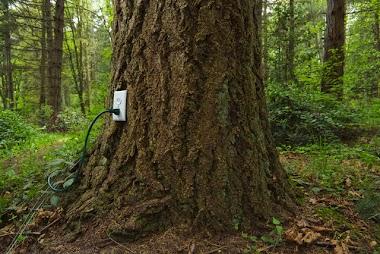 Árvore... se ligue nessa!!