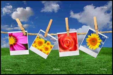 foto-rosa-Fotos-Gratis---Imagens-de-Flores-Polaroid-Contra-um-backgro-Beautiful-Sky-Grass-8280403