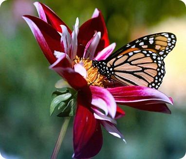 borboletas-e-flores-01