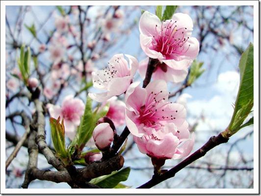 Spring_by_koMar_cica