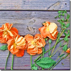 roses_on_wood copy