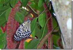 butterfly1_bw