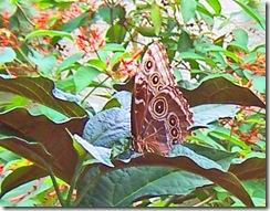 moth3_bw