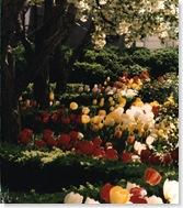 White house garden2