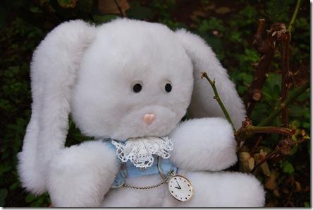 Pregunta 7 - Conejo Blanco