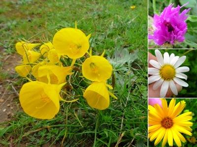 Ver flores runa
