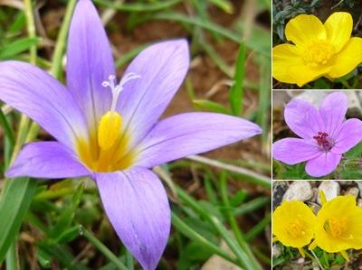 Ver flores montejunto IV
