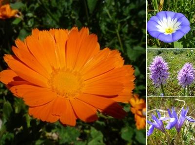 Ver flores bemposta 2
