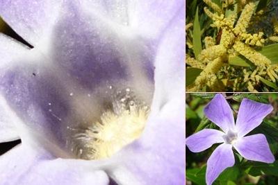 Ver Flores