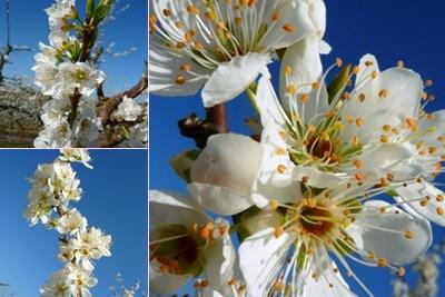 Ver árvore florida