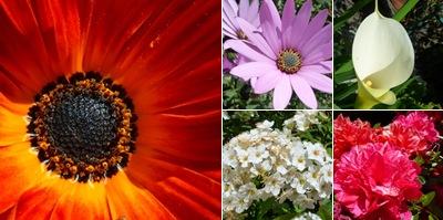 Ver Flores Lousã