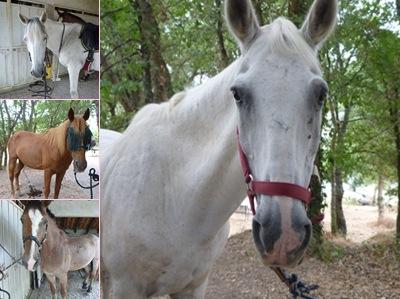 Ver cavalos qrd