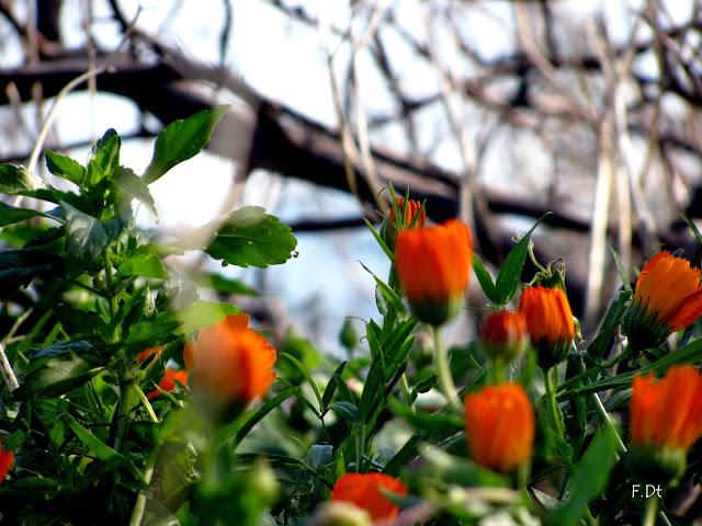 Piccoli fiori d'inverno