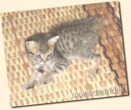 aksi kucing 004