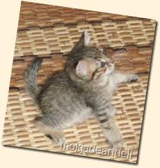 aksi kucing 002