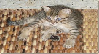 aksi kucing 101