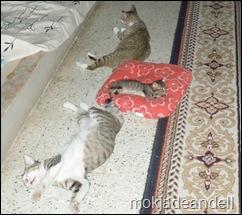sleepingb time manusia dan haiwan
