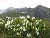 IMG_3129 Agastachys and Promontory Lake.JPG Photo