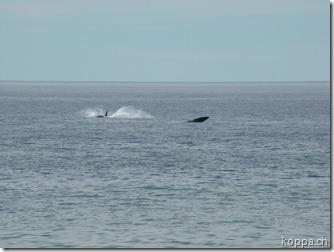 101101 Playa Doradilla (2)