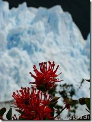 101114 NP Los Glaciares (14)