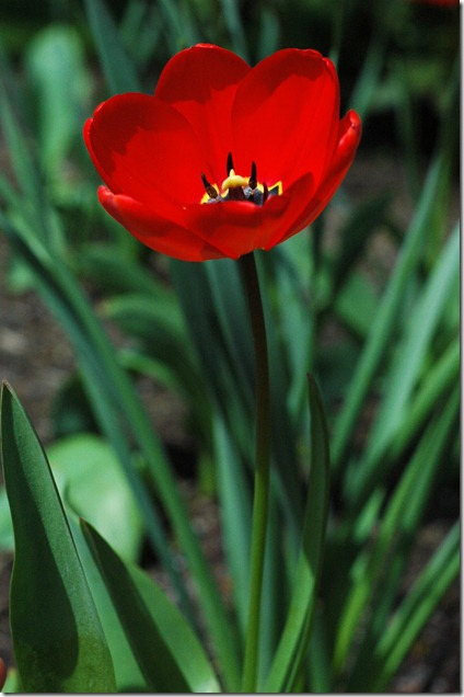 Sunny Spring 129