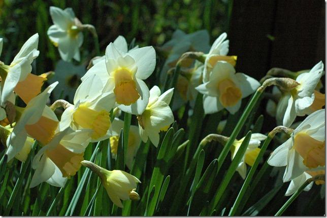 Sunny Spring 126