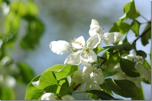 Sunny Spring 133